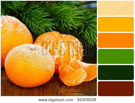 Ripe frosted tangerines with fir branch on wooden background and palette of colors