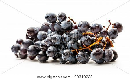 Twig Of Black Grapes