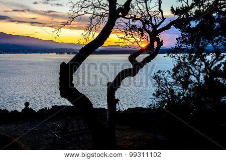 Trees silhouette on sunset ocean beach.