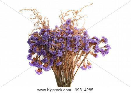 The bunch of limonium flowers isolated on white.
