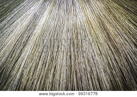 Pattern  And Texture Of Nature Broom
