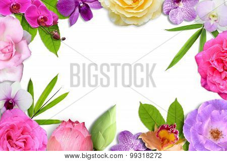 Beautiful flower blossom and leaf frame isolate on white background