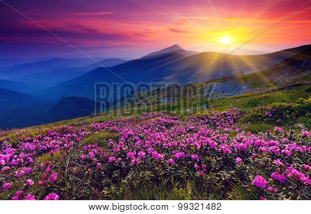 Flowers in the mountains at dawn in Lebanon