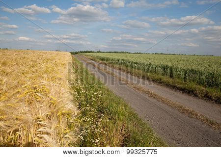 Germany, North Rhine-westphalia, Grain Fields, Barley Field, Wheat Field, Dirt Track