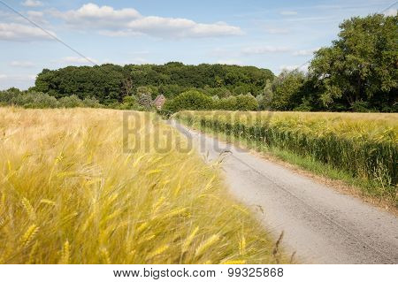 Germany, North Rhine-westphalia, Grain Fields, Barley Fields And Dirt Track