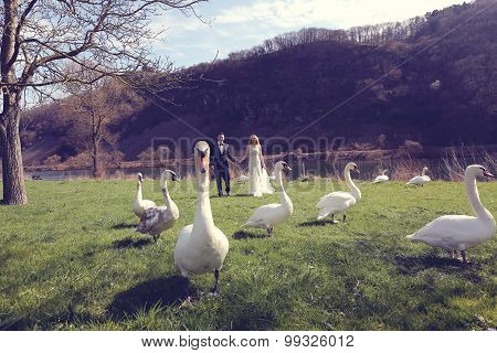 Couple Walking In A Park Surrounded By Swans