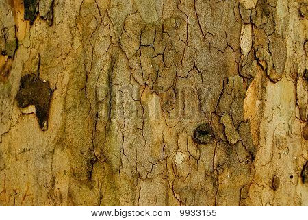 Bark Backgound