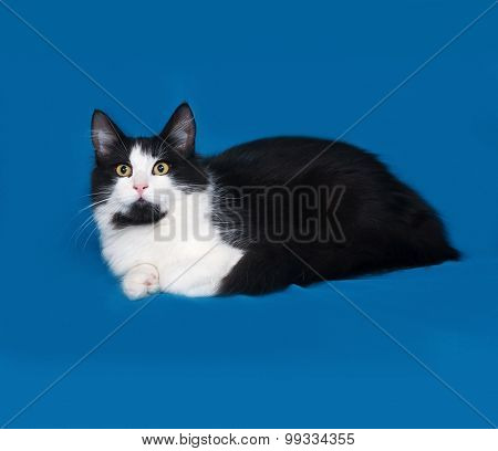 Fluffy Black And White Cat Lies On Blue