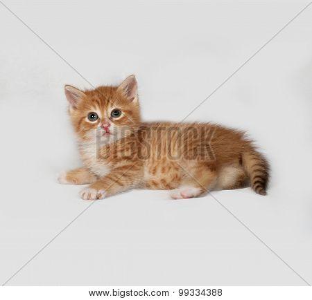 Red Fluffy Kitten Lies On Gray
