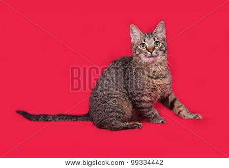 Striped Kitten Sitting On Red