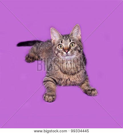 Striped Kitten Lying On Lilac