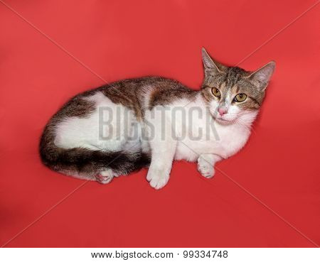 Tricolor Striped Cat Lies On Orange
