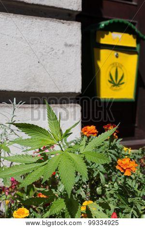 marijuana plant outdoor hemp museum, berlin