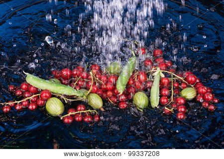 Red Currants, Gooseberries, Peas In Water