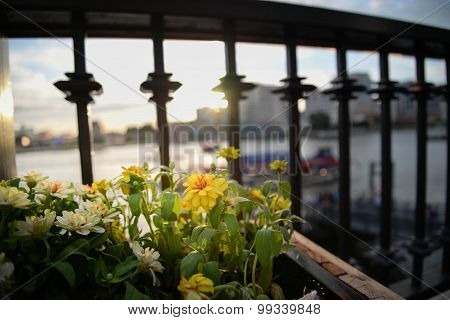 Yellow Flower In Riverside Under Sunset