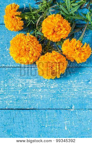 Bouquet Of Terry Marigold On A Blue Wooden Background