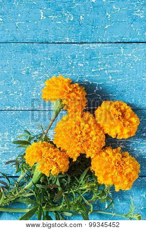 Terry Orange Marigolds On A Blue Wooden Background