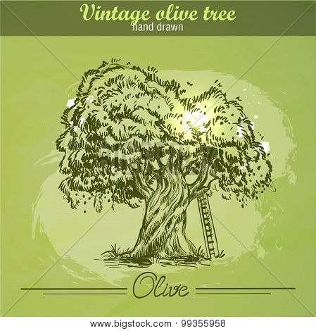 Vintage hand drawn olive tree