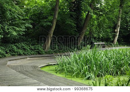 Foot Path Around The Pond