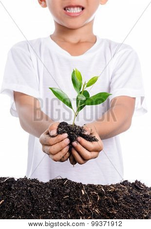 Boy Holding Young Plant In Hands Above Soil