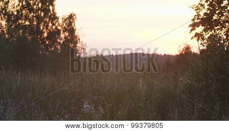 wild herb grass on rural field in sunset