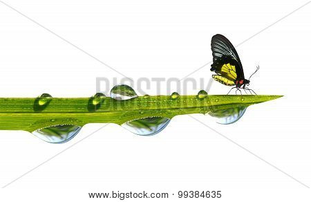 Butterfly sitting on green grass with dew drops