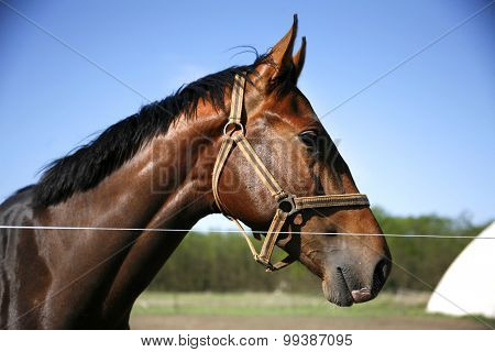 Head Shot Of A Young Stallion In The Corral Against Blue Sky