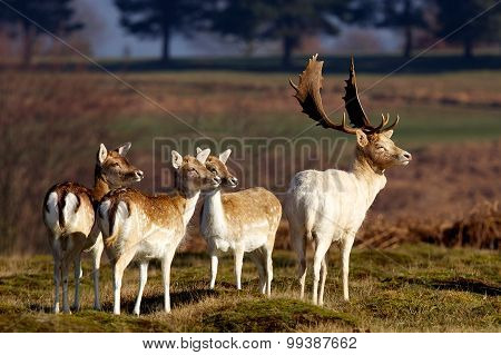 small group of deer