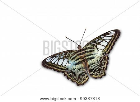 Isolated Top View Of Clipper Butterfly