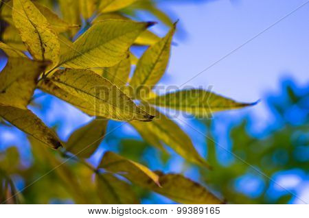 Tree branch with yellow autumn leaves in a forest on mountain Miroc