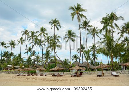 Beautiful Beach Resort With Many Coconut Trees
