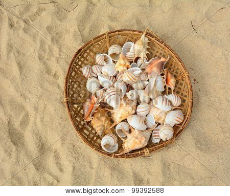 Shells In The Bamboo Basket