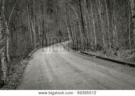 Road in autumn forest landscape