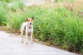 image of seeing eye dog  - on an open road waiks an street dog side of the road - JPG