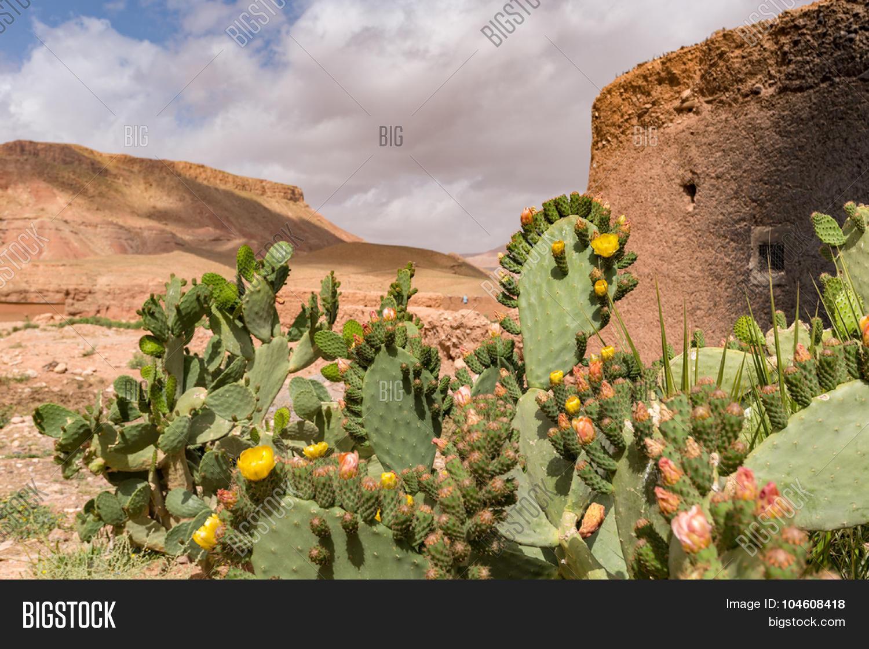 sahara desert vegetation wwwimgkidcom the image kid