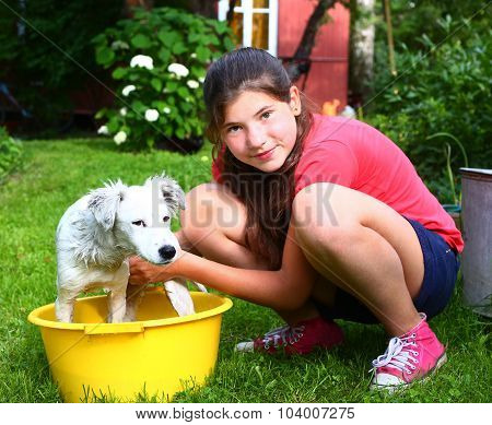 Girl Wash White Puppy In The Basin