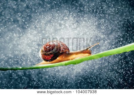 snail with particles bokeh and blue background
