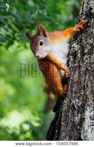 squirrel on a tree, green bokeh background