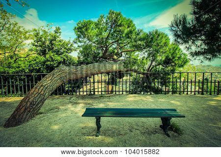 Beautiful Landscape With Inclined Pine And Bench.