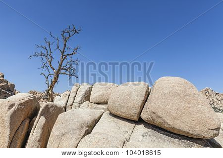 Dry Tree On Rock Formation In Joshua Tree National Park, California, Usa.