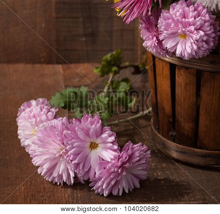 Chrysanthemums  on old wooden table