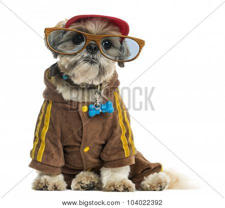 Dressed up Shih tzu with a cap and  wearing glasses, sitting, isolated on white