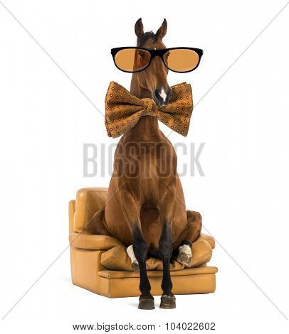 Andalusian horse sitting on an armchair, wearing glasses and a bow tie