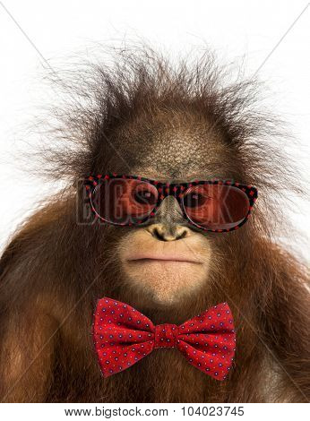 Close-up of a young Bornean orangutan wearing glasses and a bow tie, isolated on white