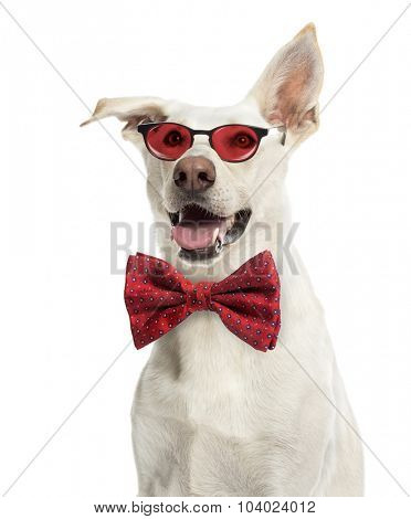 Crossbreed dog wearing glasses and a bow tie against white background