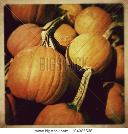 Pumpkin harvest - Instagram filter