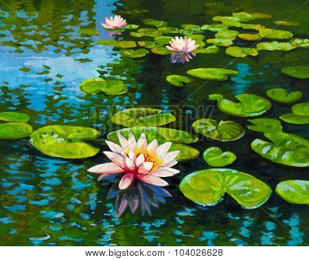 Beautiful water lilies and reflections.