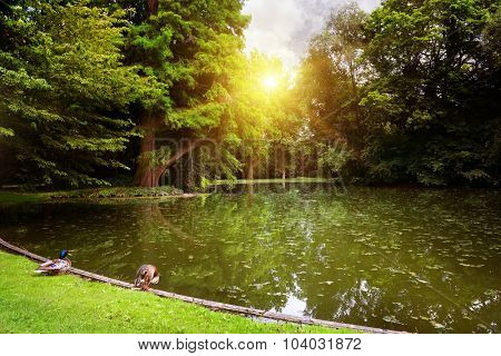 Dawn over small lake in woods