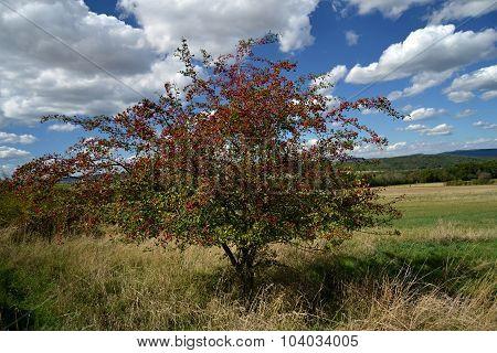 bush near field