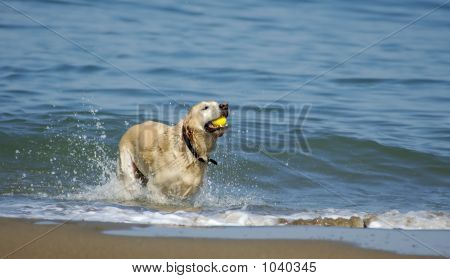 Dog Running Out Of San Francisco Bay 4